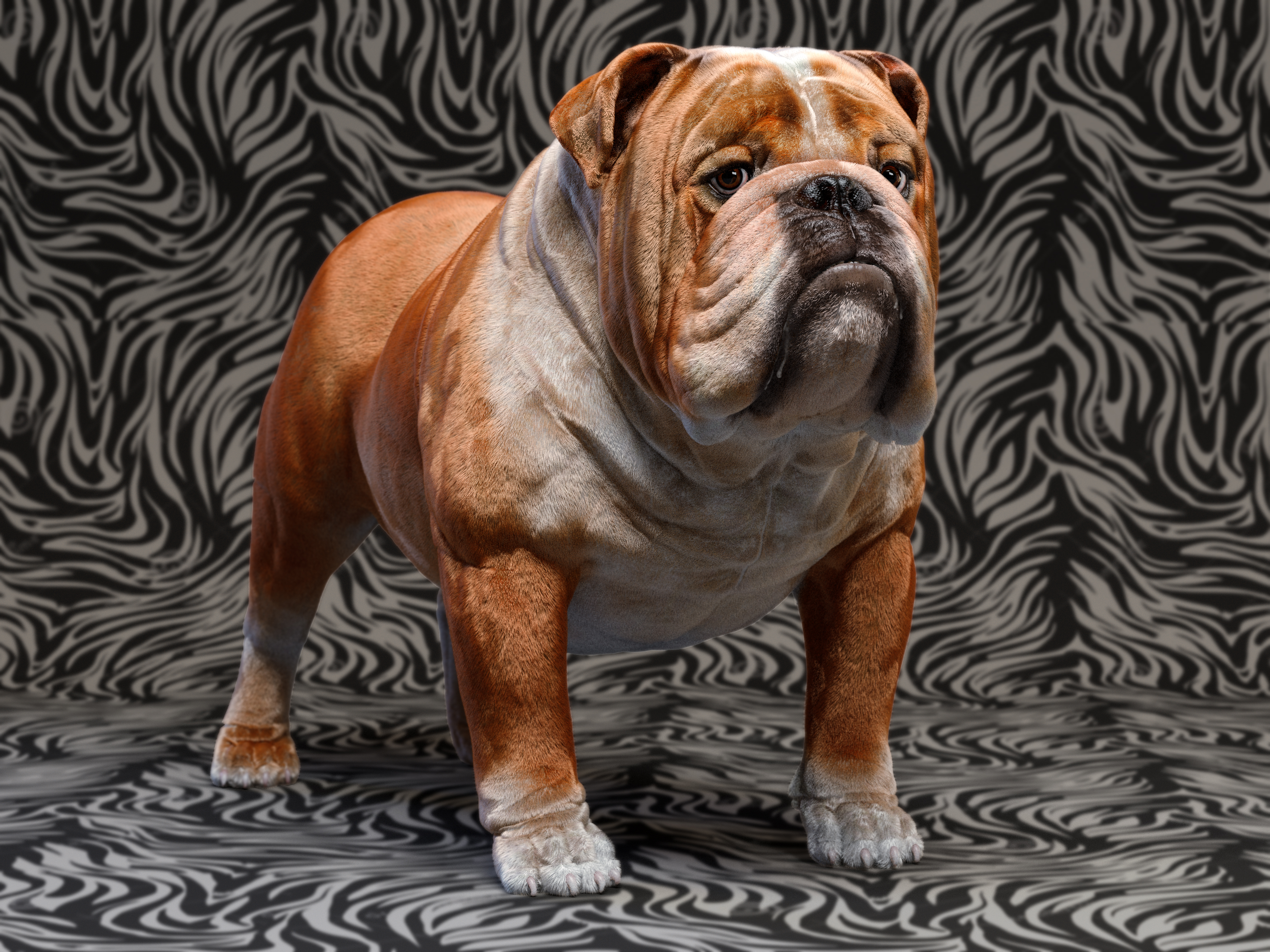 Mustang the bulldog